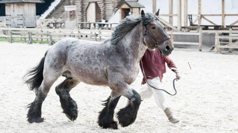 В парке «Киевская Русь» состоится шоу-выставка «Мир лошадей»