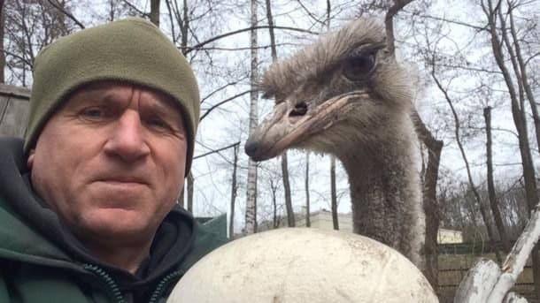 В зоопарке «Межигорье» страусы снесли первое яйцо