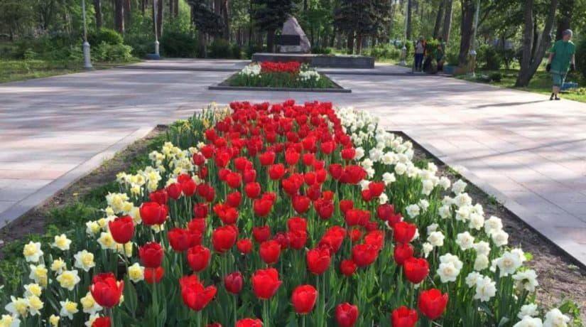 В парке Партизанской славы вандалы уничтожили клумбу с цветами