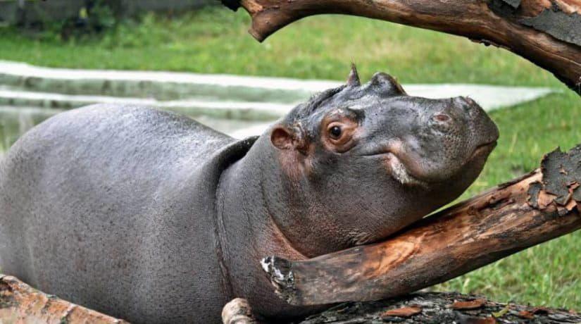 Киевский зоопарк показал, как спасаются от жары его обитатели