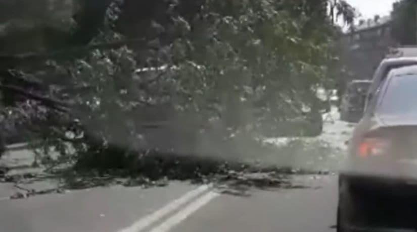 На улице Грушевского упавшее на проезжую часть дерево повредило три автомобиля