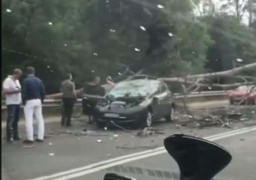 На Новоирпенской трассе дерево упало на автомобиль, образовался затор