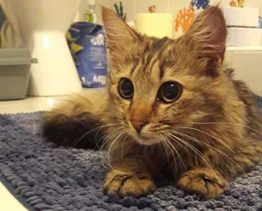Волонтеры приютили кошку, которая ела колбасу в витрине супермаркета
