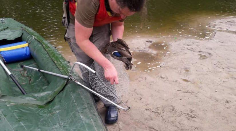 Результаты анализов с озера на Теремках, где массово гибнут птицы, исключили инфекцию