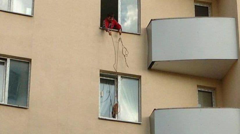 Спасатели просят не оставлять окна на проветривание при наличии домашних животных