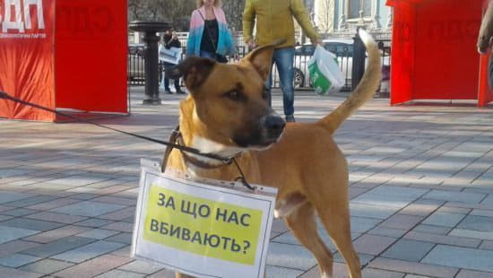 Киев лидирует по количеству установленных фактов живодерства