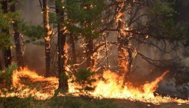 До 9 сентября в Киеве ожидается чрезвычайный уровень пожарной опасности